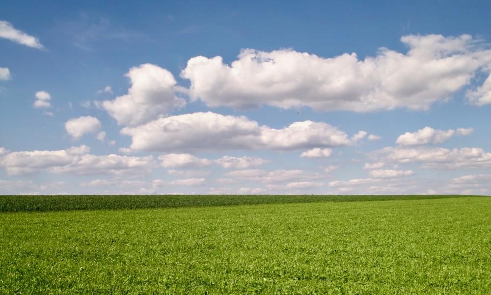 green fields - 1.jpg