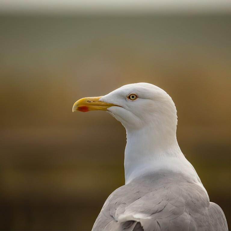 Gull L+R-2- DENOISED-denoise.jpg