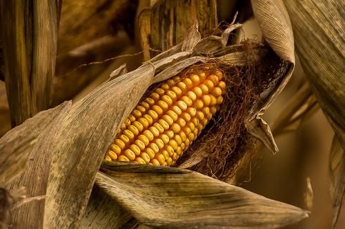 Harvest Hues.jpg