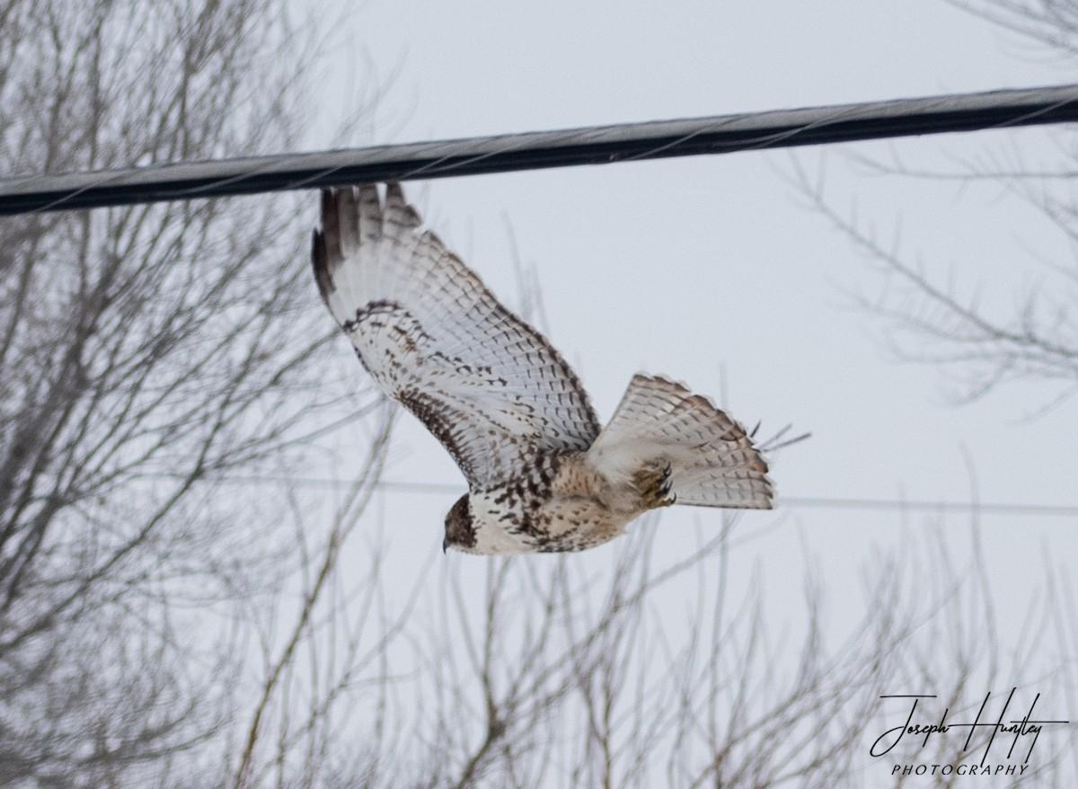 Hawk-0701.jpg