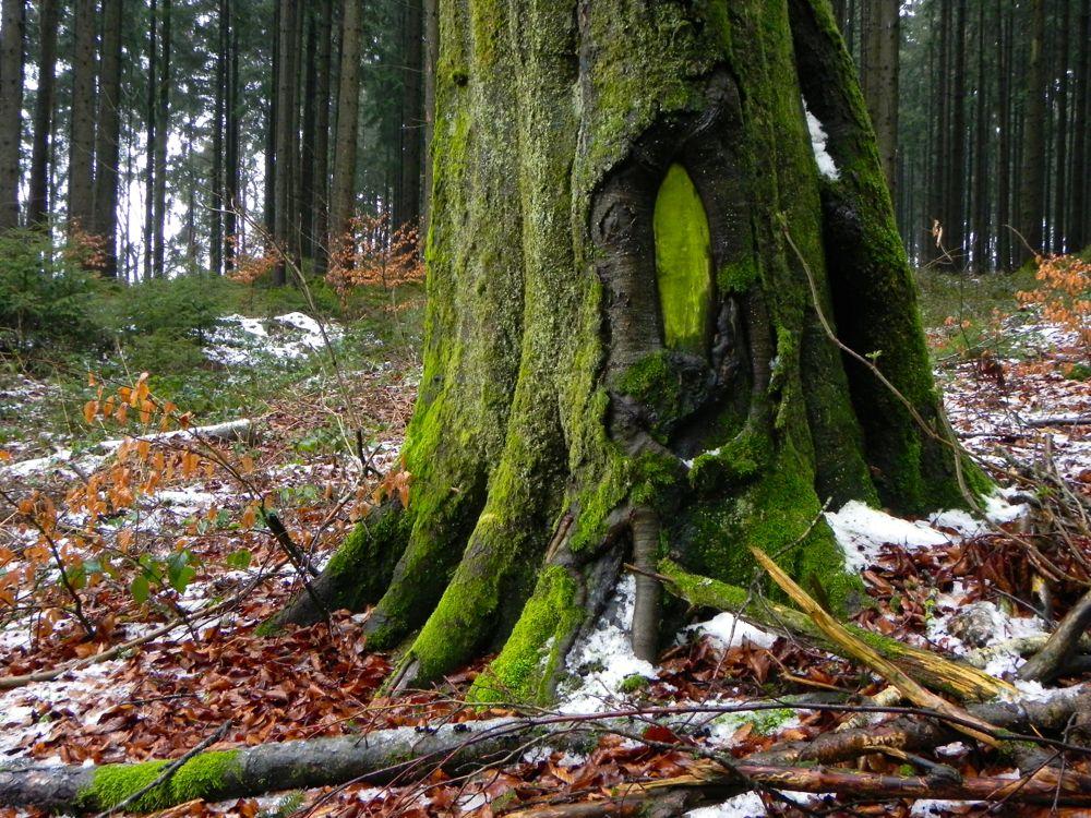 Heilachwald greenman.jpg