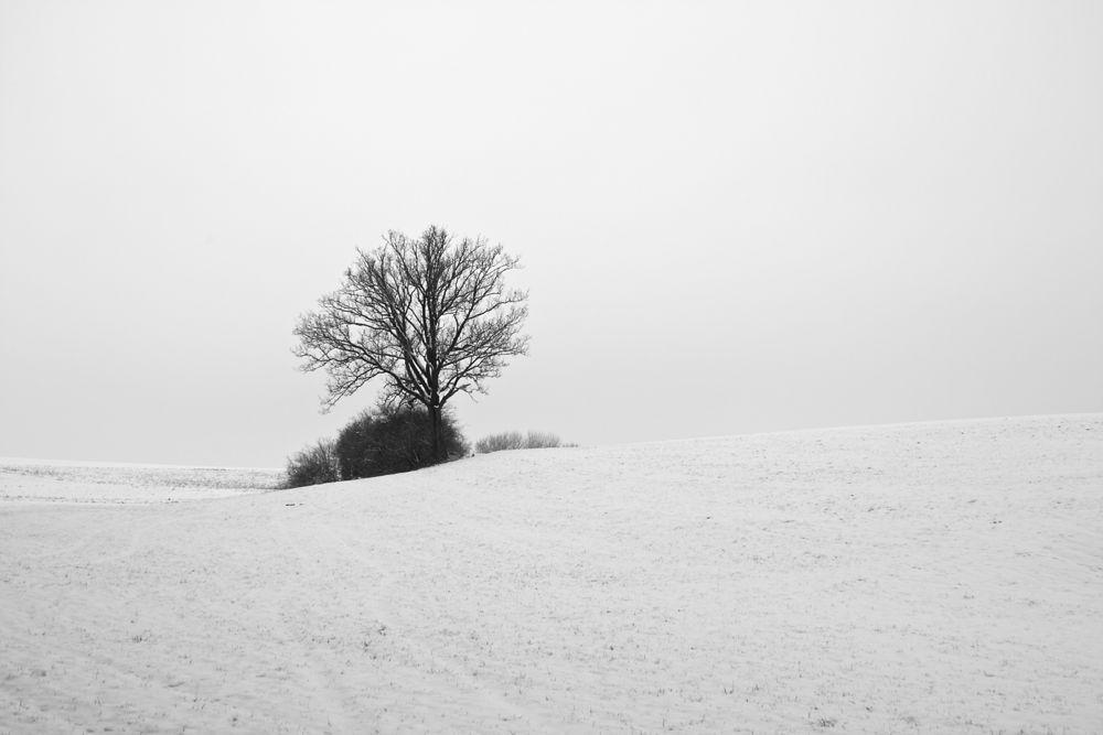 Heilachwald snow 2.jpg