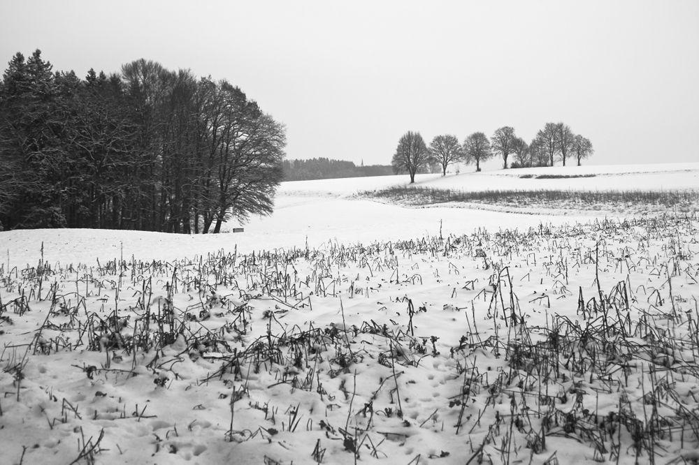 Heilachwald snow 3.jpg