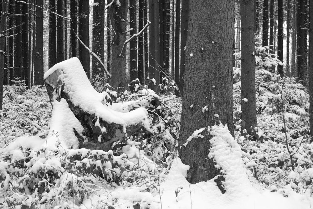 Heilachwald snow.jpg