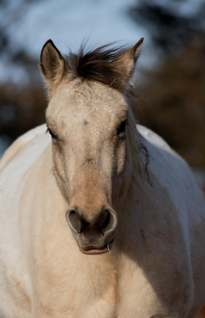 horse2.jpg