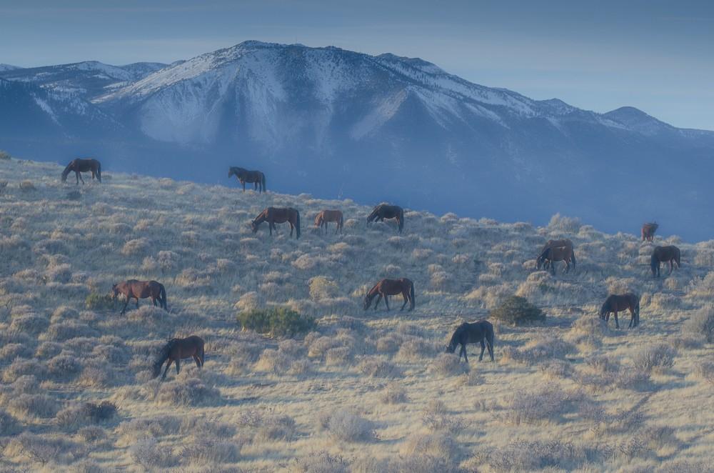 Horses-1-11.jpg