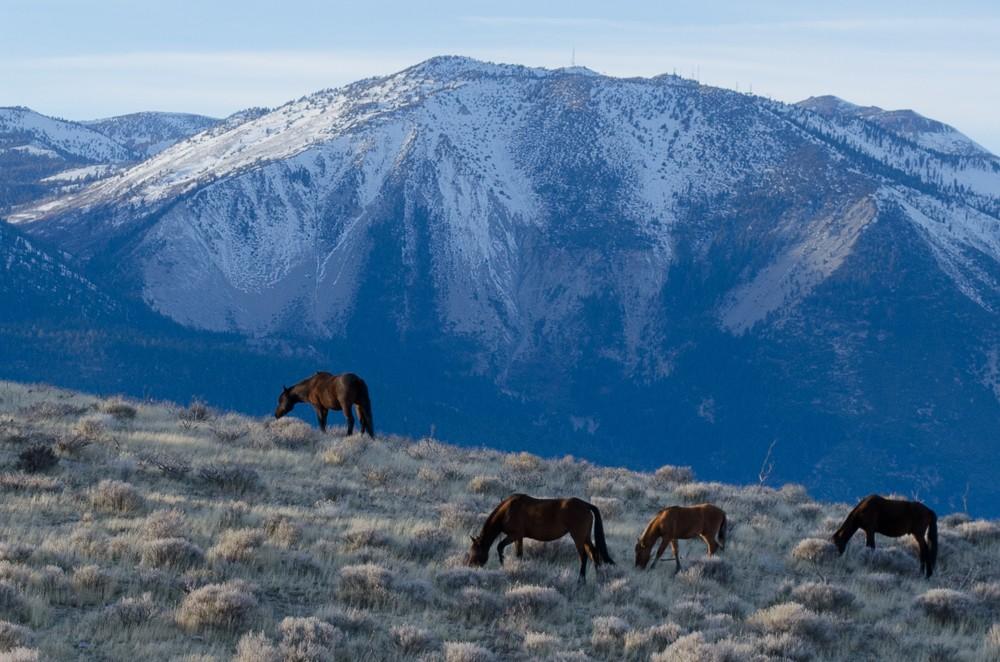 Horses-1-12.jpg