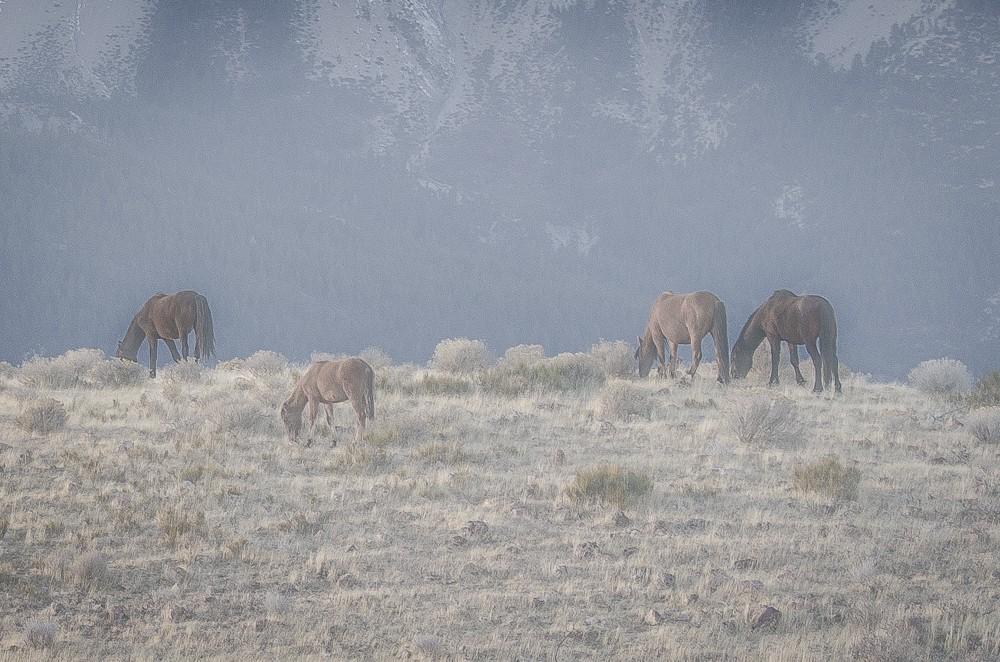 Horses-1-13.jpg
