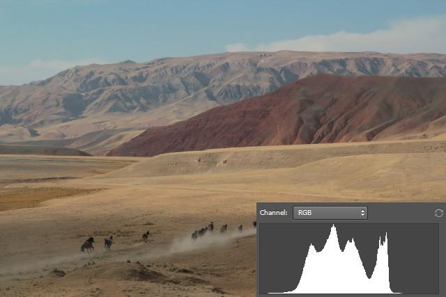 horses_camera.jpg