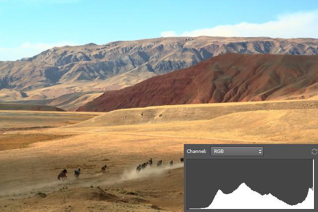 horses_dpp.jpg