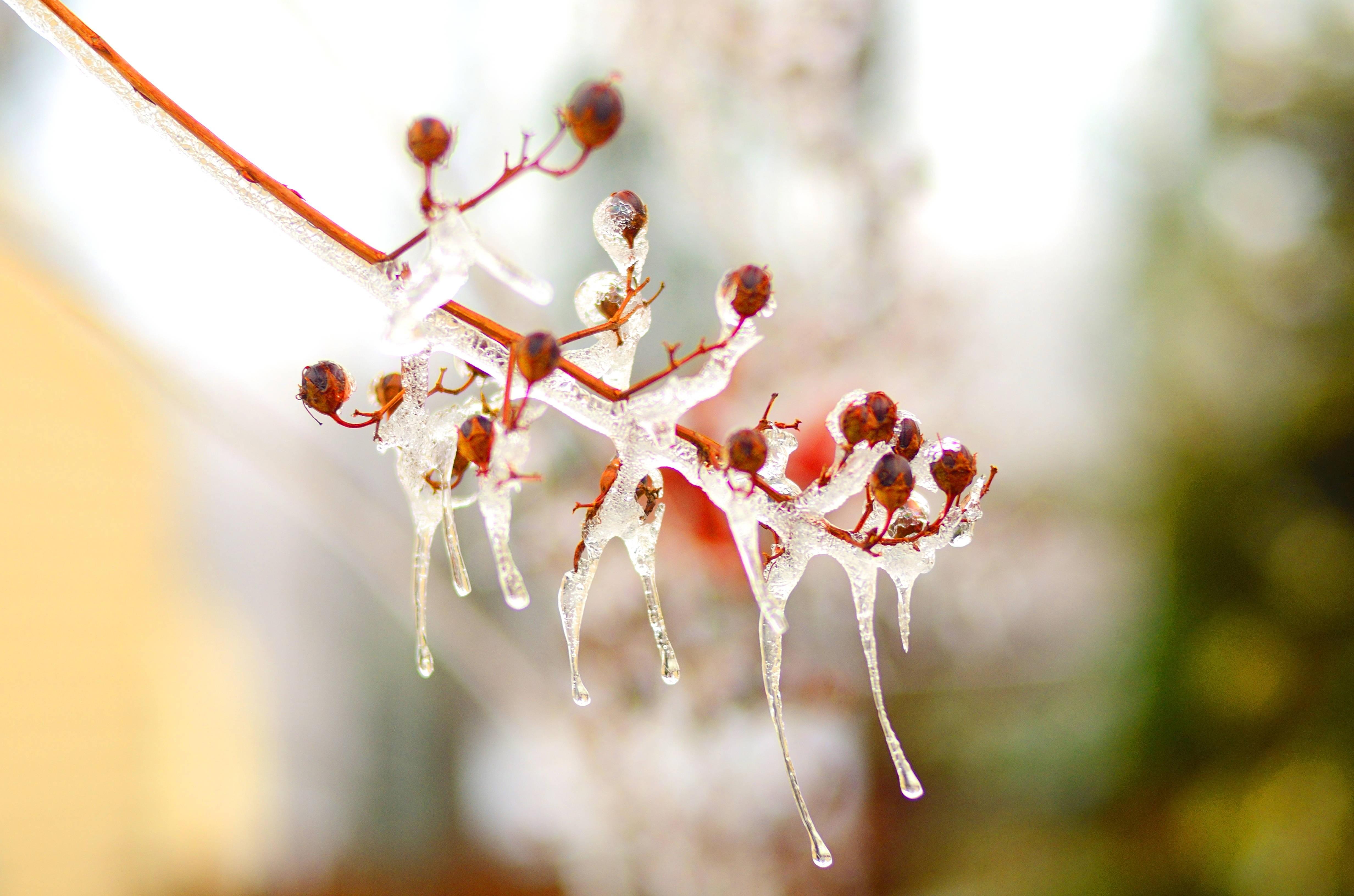 Ice-6.jpg