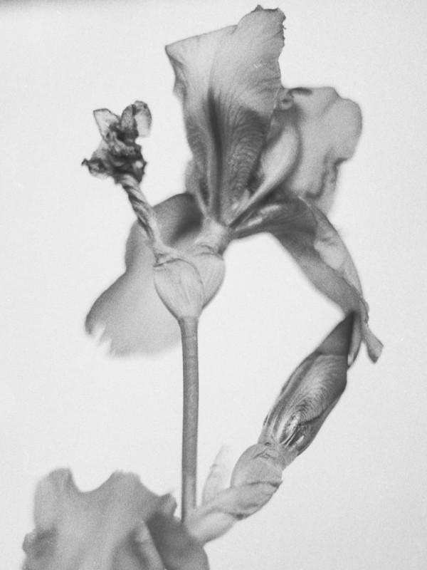 iris-1-4.jpg