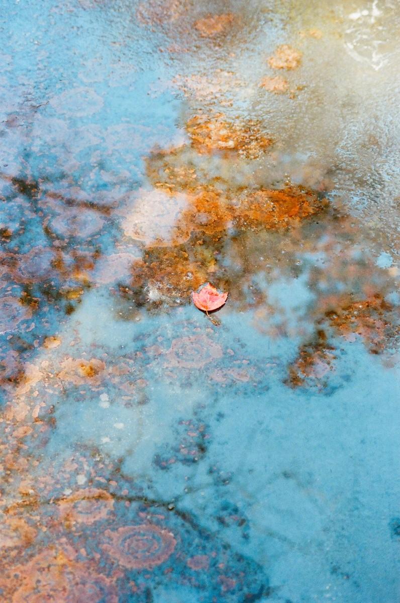 Japanese Pond Reflection.jpg