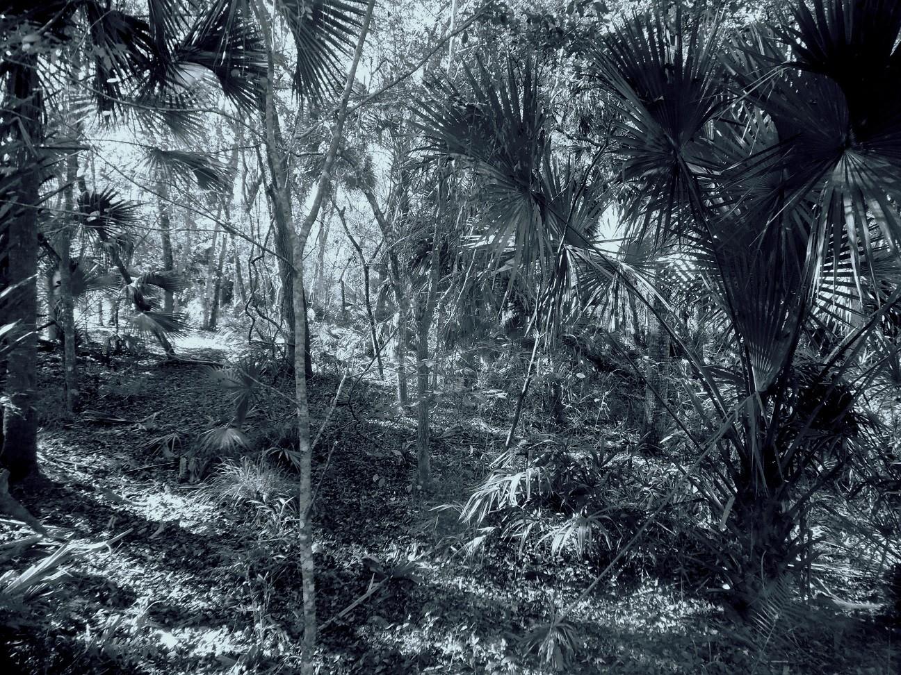 Jurasic trail 3.jpg