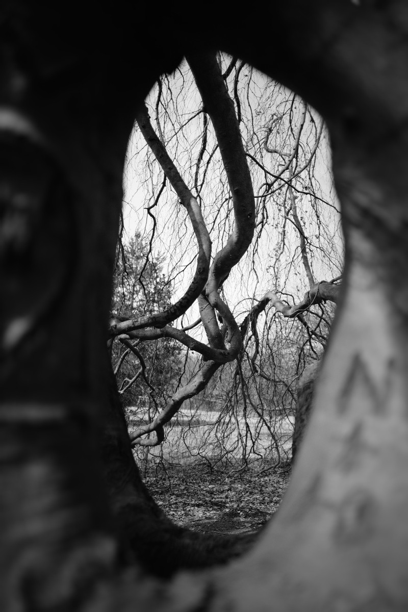 knarley trees (2).jpg