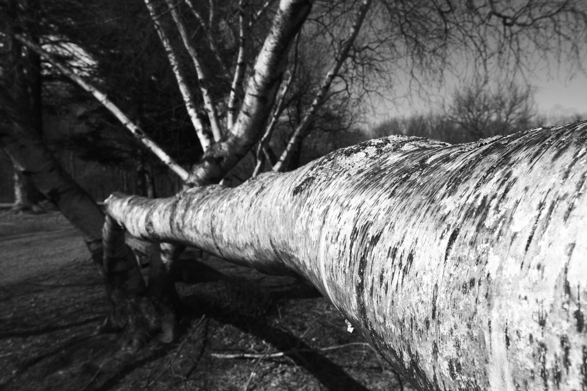 knarley trees.jpg