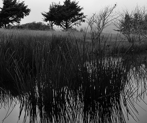 lagoon grass and trees 100 res 1700.jpg