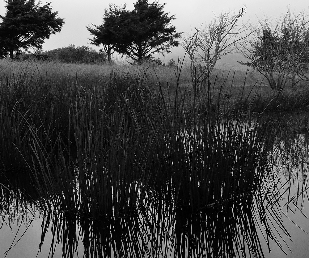 lagoon grass and trees 300 res 1200.jpg