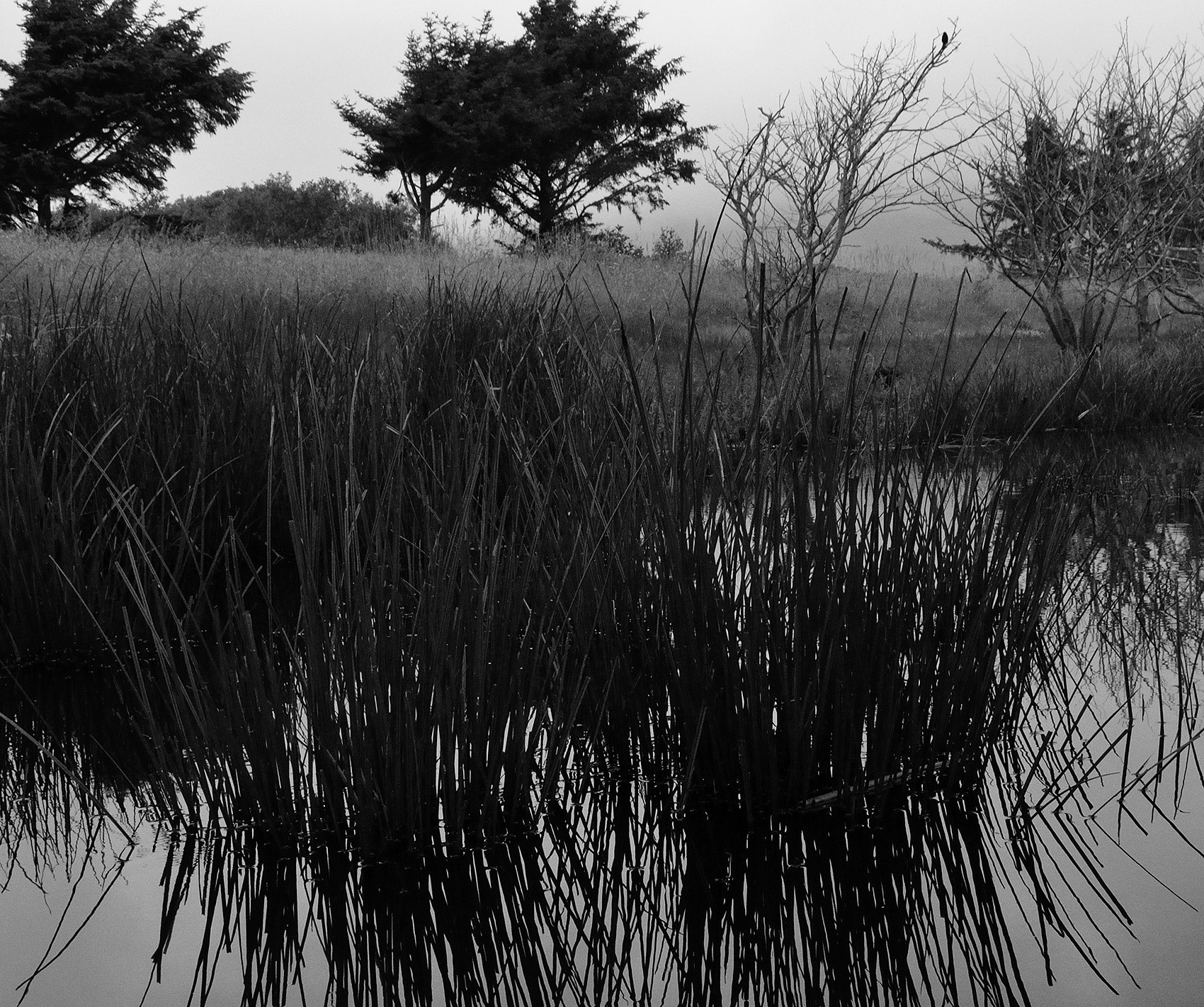 lagoon grass and trees 300 res 1700.jpg