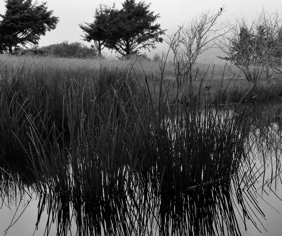 lagoon grass and trees.jpg