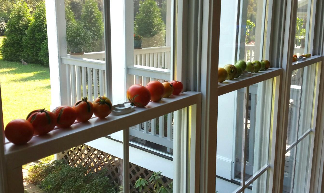 Last tomatoes 2020 II.jpg