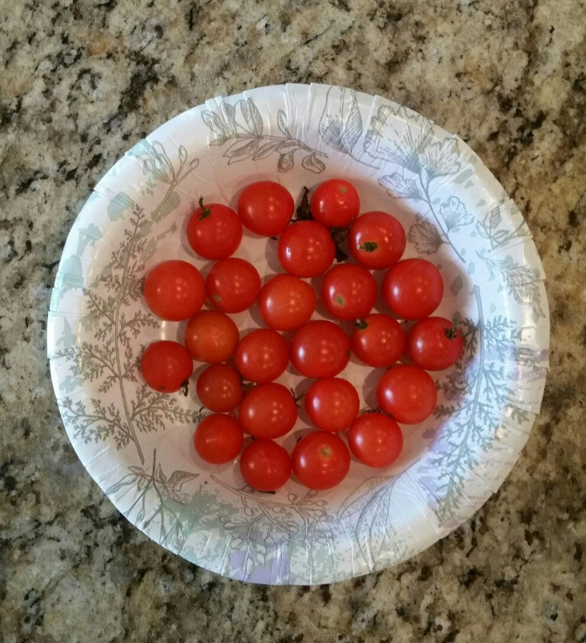 Last tomatoes 2020.jpg
