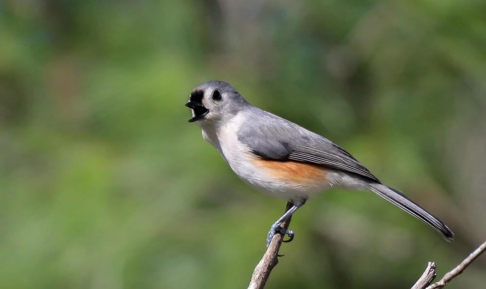Little Bird 2 (1 of 1).jpg