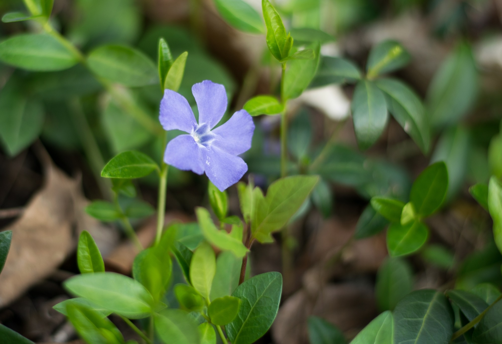 Little Flower - Small.jpg