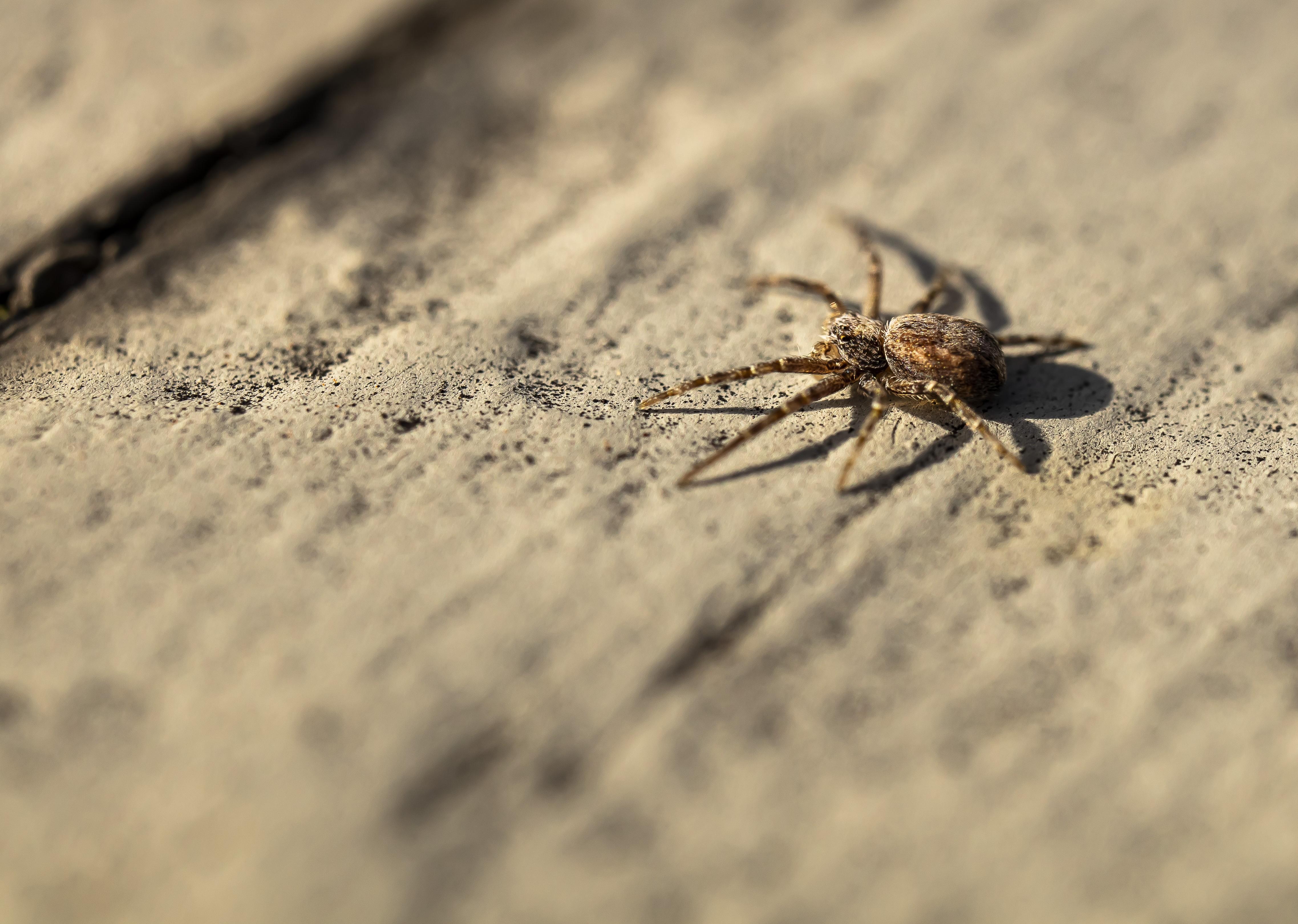 Little Spider.jpg
