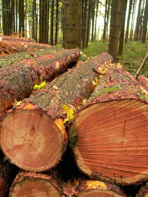 logs and trunks.jpg