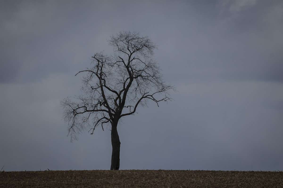 Lone Tree on a Hill.jpg