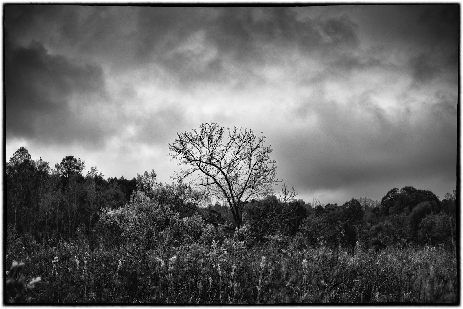lone tree9_sm (2062).jpeg