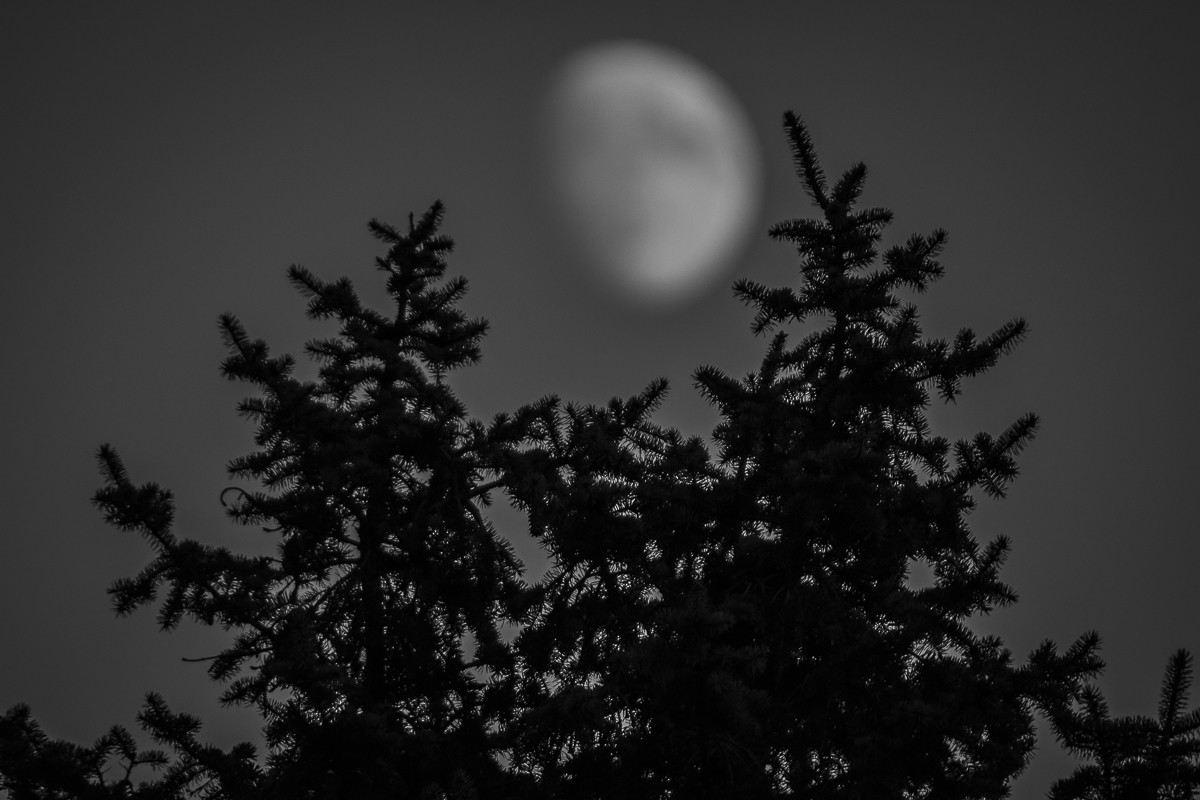 Man in the Moon 2 .JPG
