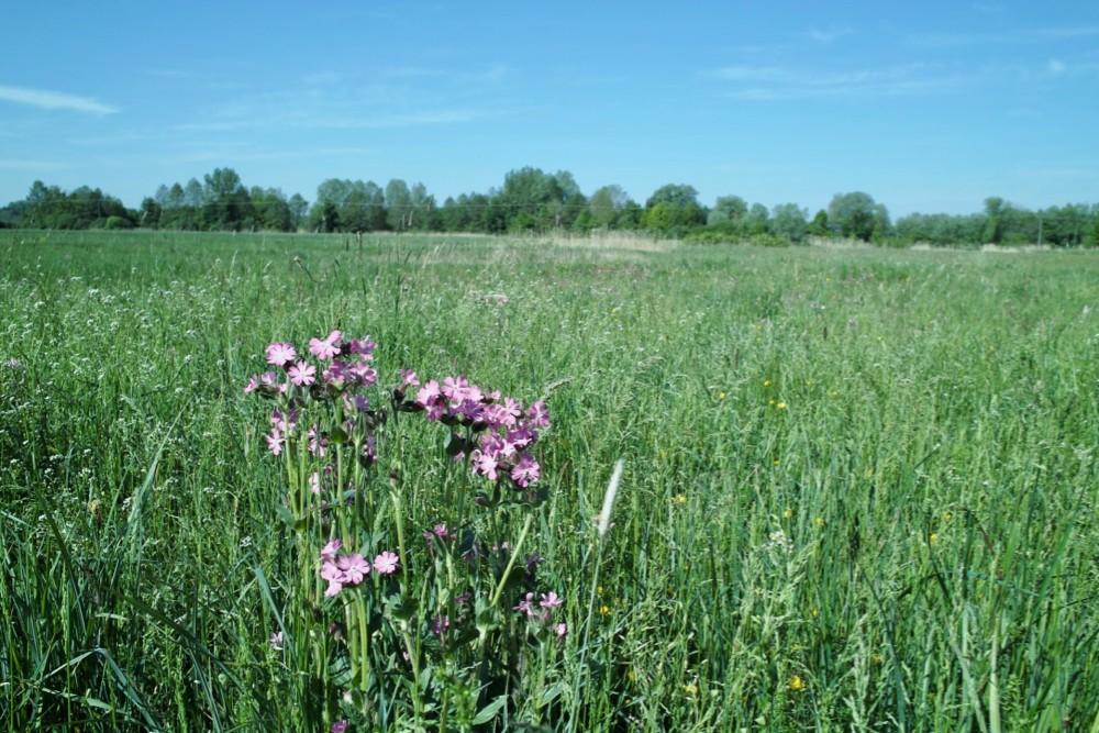 meadow flowers 1 - 1.jpg