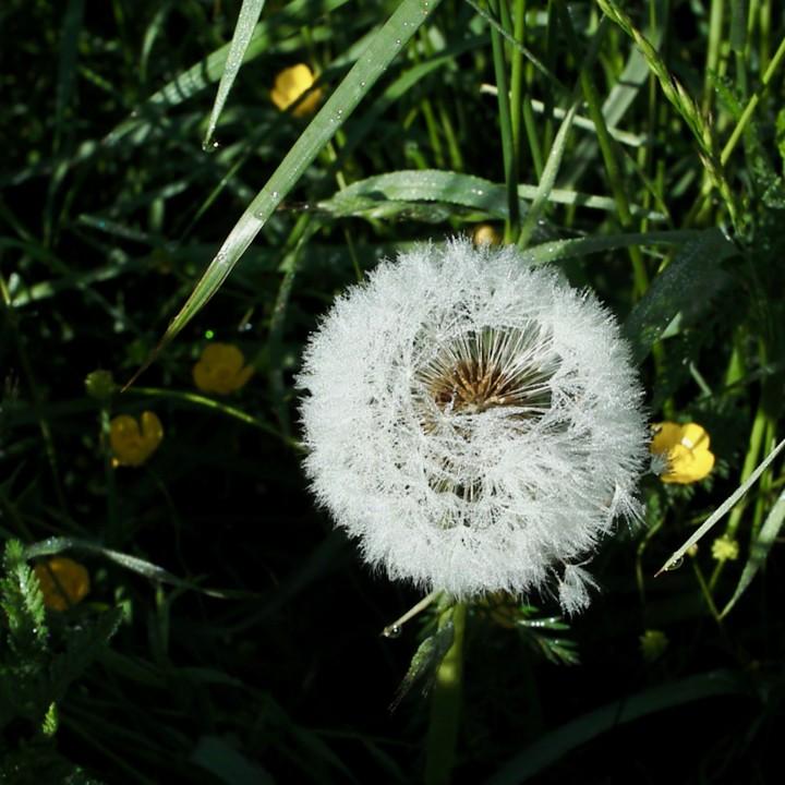 meadow flowers 3 - 1.jpg