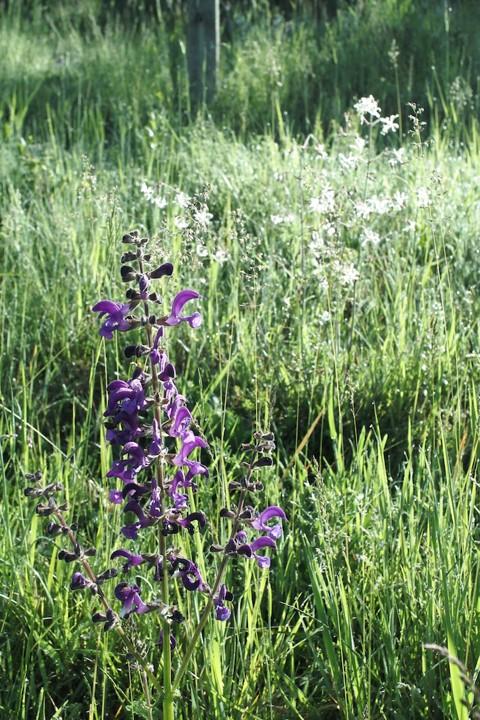 meadow flowers 5 - 1.jpg
