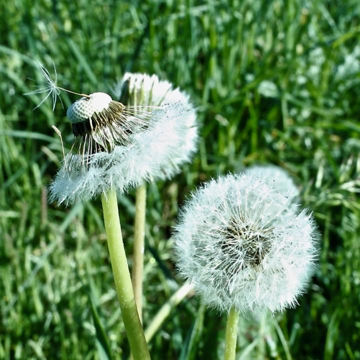 meadow flowers 7 - 1.jpg