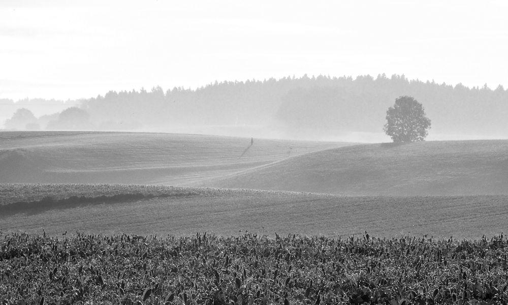 misty morning landscape.jpg