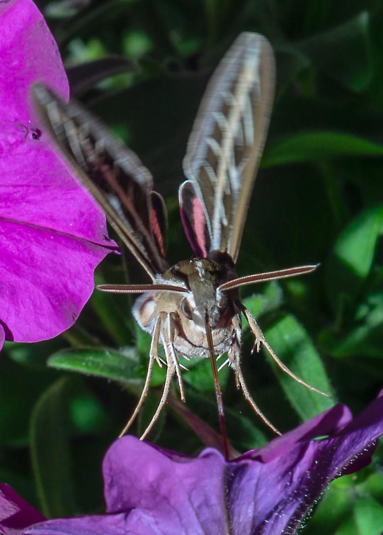 moth-1-2.jpg