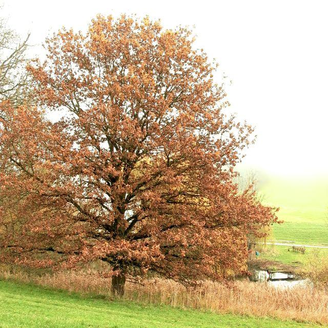 oak pond.jpg