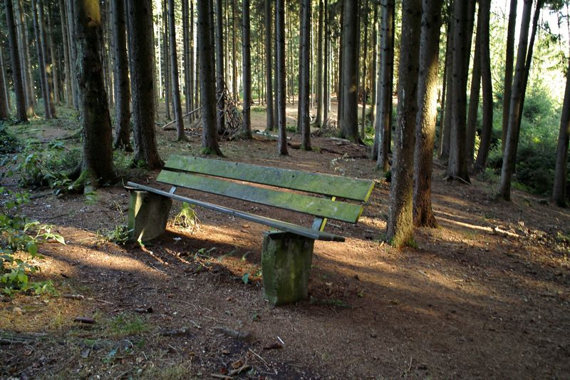old bench in woods.jpg