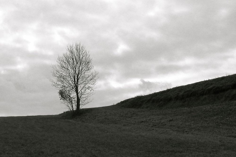 one tree ridge 3x2 bw.jpg