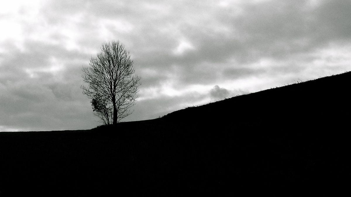 one tree ridge.jpg