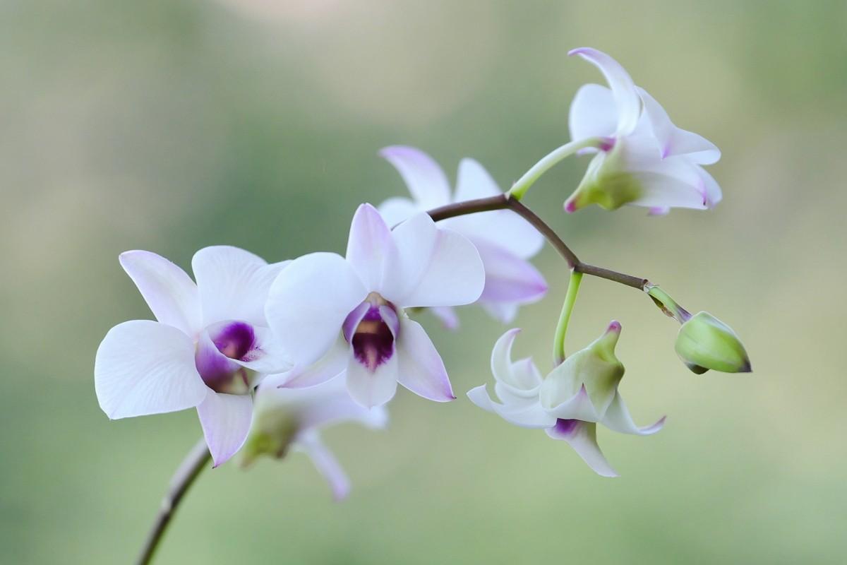 Orchid overcast.jpg