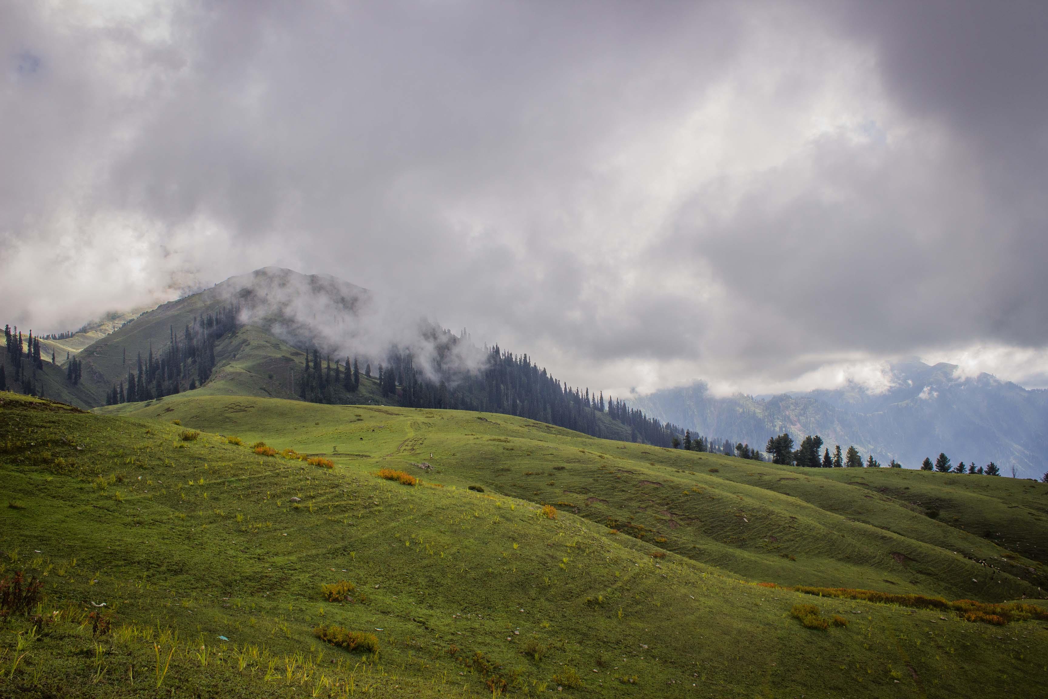 Paya Meadows-2.jpg