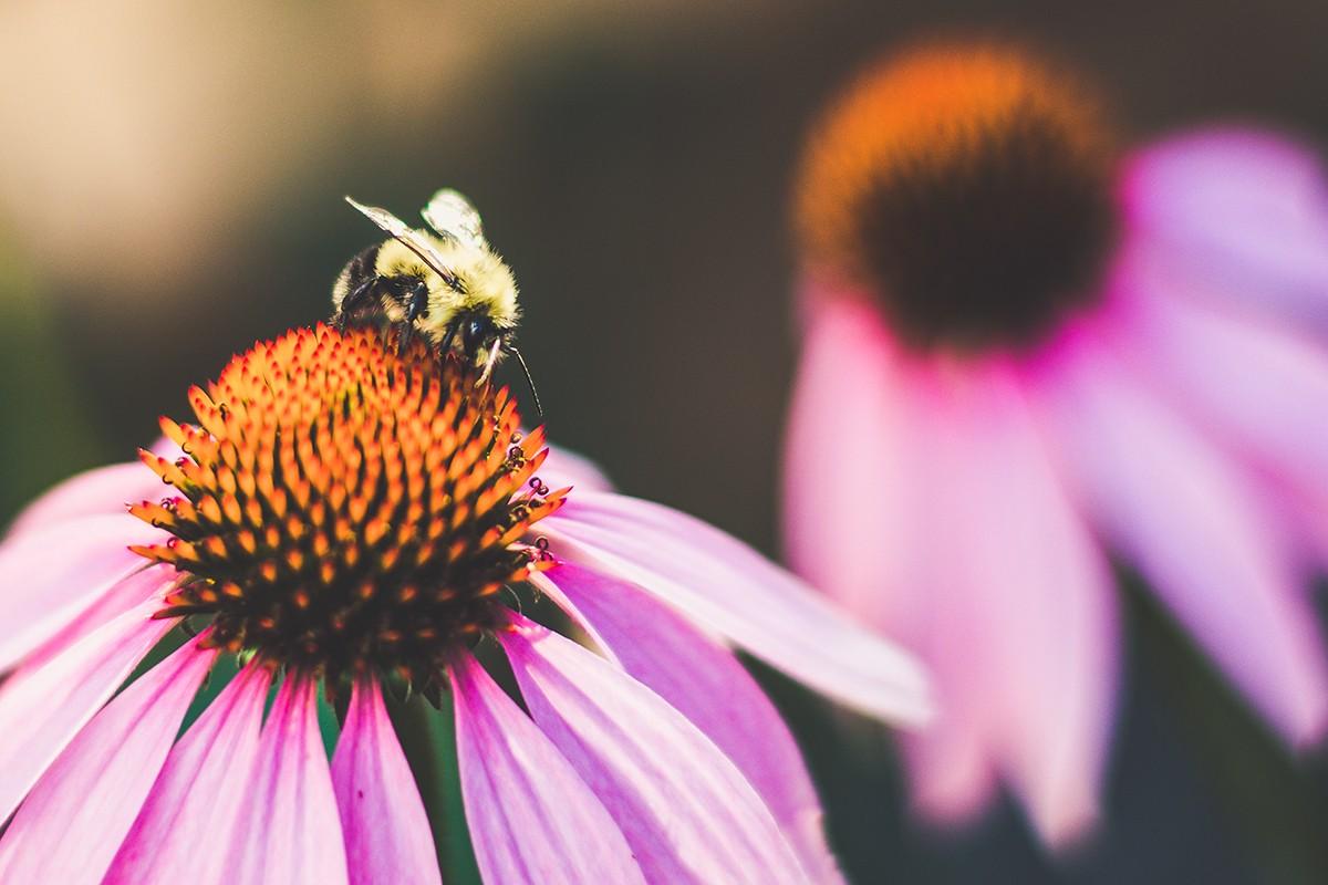 Pollen_Collector.jpg