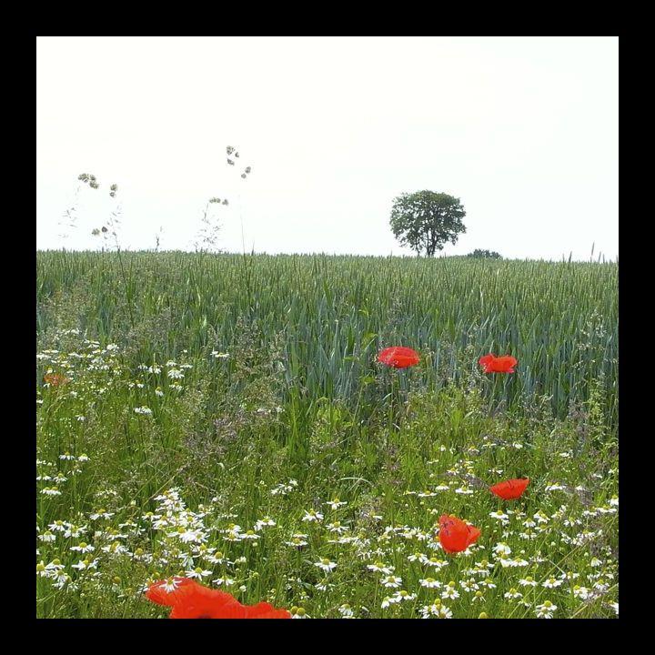 poppies&trees bg.jpg