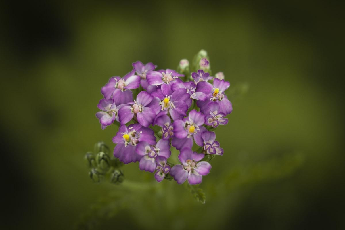Purple Wildflowers 2.jpg