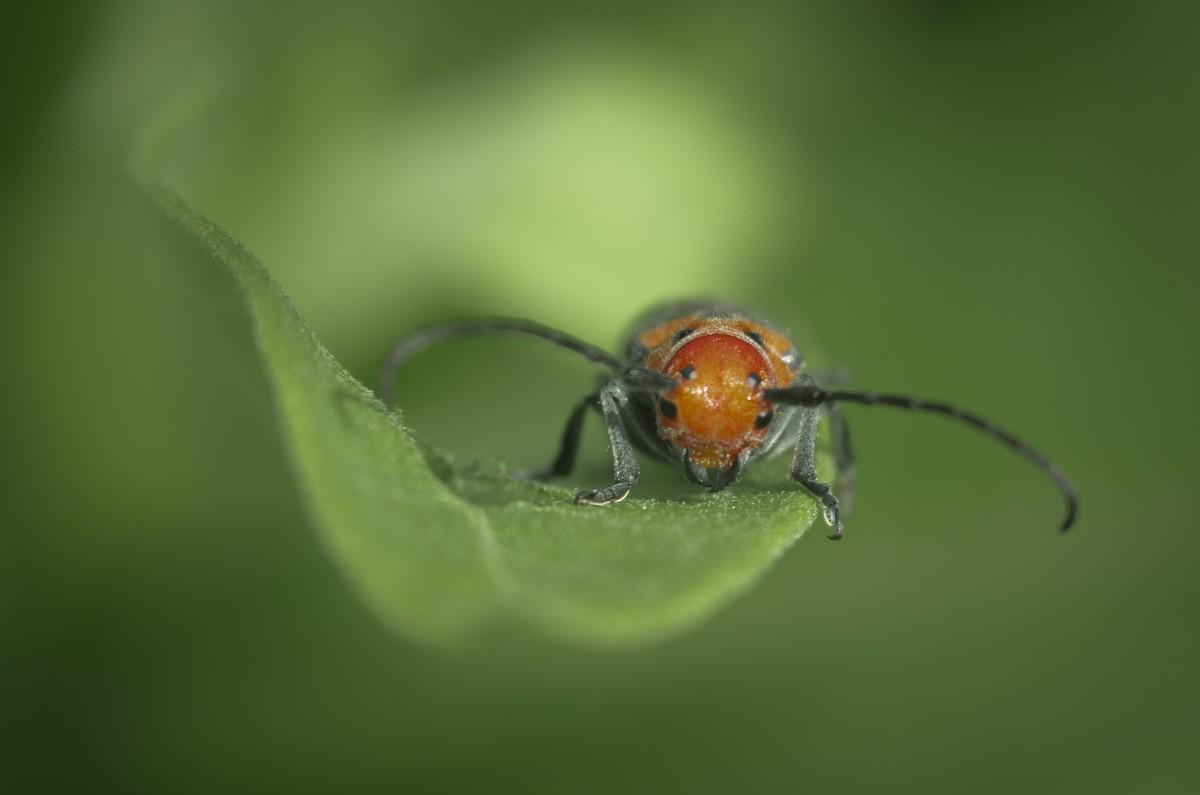 Red Bug.jpg