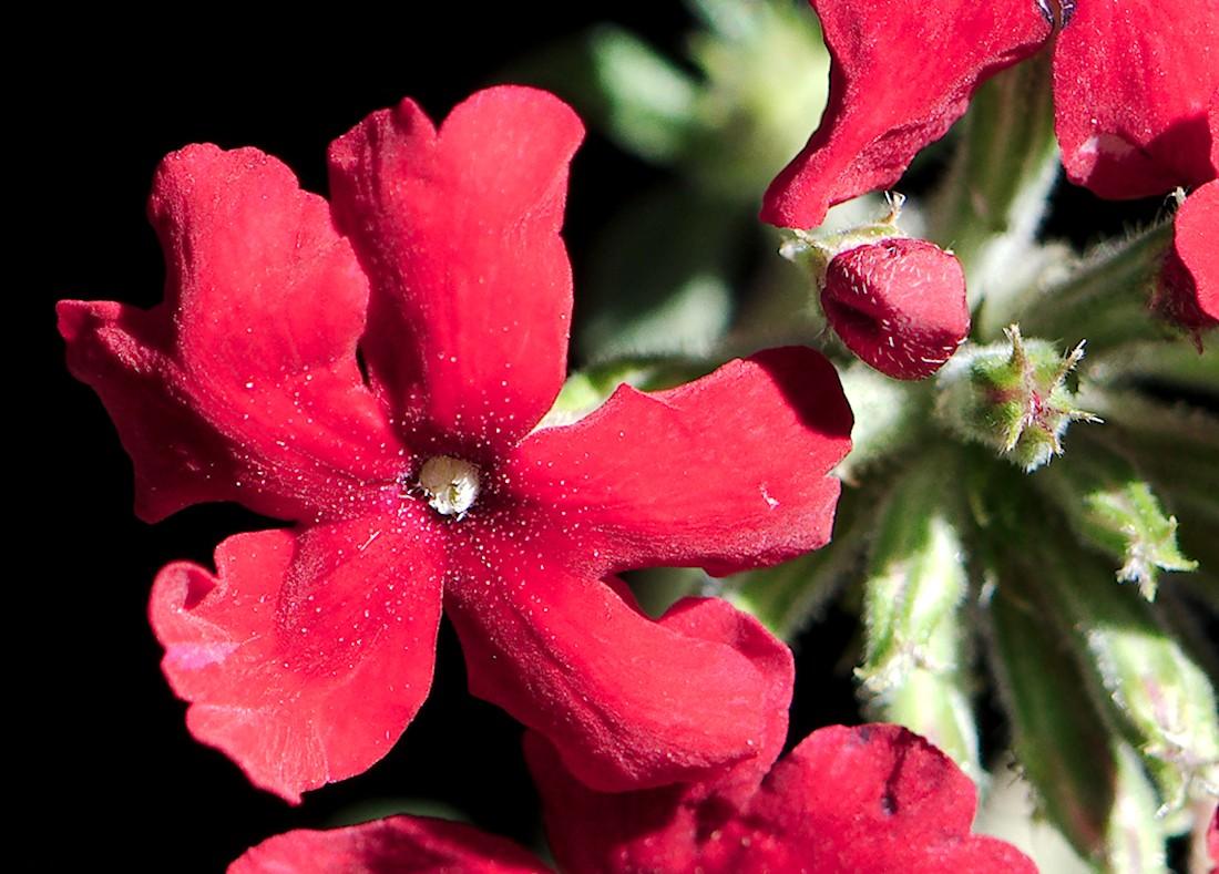 Red flower up close.jpg